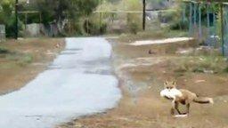 Смотреть Лиса ловко украла курицу