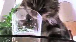 Смотреть Кот лакомится молоком из стакана