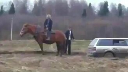 Конь-тягач смотреть видео прикол - 1:33