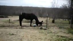 Смотреть Лошадь и собака - лучшие друзья