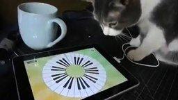 Смотреть Кошка играет на планшете