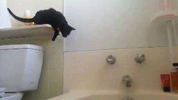 Прыжок трусливого кота смотреть видео прикол - 0:09
