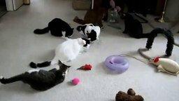 Смотреть Кот избавился от соперников
