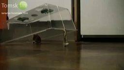 Мышь, которую не обмануть смотреть видео прикол - 1:35