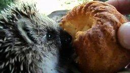 Смотреть Ёжик пожирает кекс