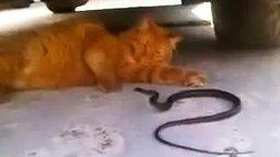Кот играет со змеёй смотреть видео прикол - 2:54