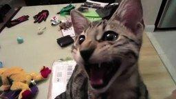 Кот смеётся смотреть видео прикол - 1:03