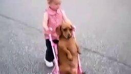 Смотреть Довольная такса в коляске