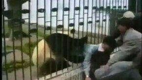 Животные против людей смотреть видео прикол - 5:45