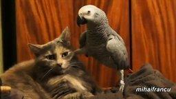 Смотреть Наглые попугаи и терпеливые кошки