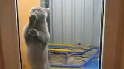 Смотреть Чистоплотный котик