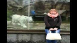Белый тигр и девушка смотреть видео прикол - 0:36