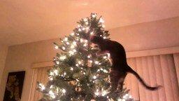 Смотреть Кот и рождественская ёлка