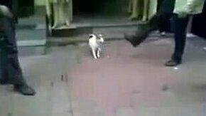 Смотреть Злобный котяра напал на собаку
