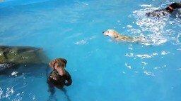 Собака-поплавок смотреть видео прикол - 0:34
