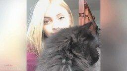 Короткие ролики с кошками смотреть видео прикол - 4:07