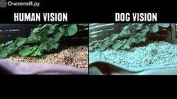 Смотреть Как животные видят мир
