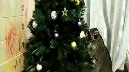 Кот, енот и новогодняя ёлка смотреть видео прикол - 3:51