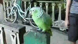 Попугай смеётся над туристами смотреть видео прикол - 2:04