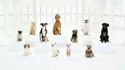 Смотреть Имперский марш по-собачьи