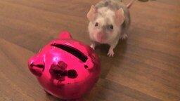 Мышка и копилка смотреть видео прикол - 1:08