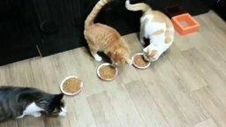 Кот оберегает приятелей от ожирения смотреть видео прикол - 0:56