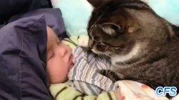 Смотреть Кошки заботятся о малышах