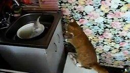 Кот против рыбины смотреть видео прикол - 0:23