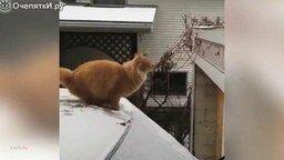 Короткие приколы с котами смотреть видео прикол - 2:27