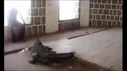 Смотреть Экстремальный спорт с крокодилом