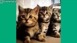 Огромная подборка лучших смешных кошек смотреть видео прикол - 24:44