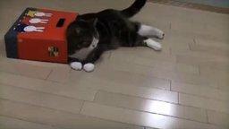 Кот Мару и коробки смотреть видео прикол - 1:37