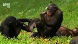 Смотреть Женская логика на примере обезьян