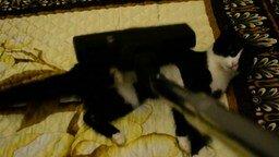 Громкий пылесос против кота смотреть видео прикол - 1:36