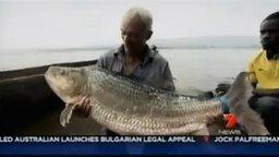 Тигровая рыба Голиаф весом 50 кг смотреть видео прикол - 1:38