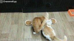 Смотреть Топ-приколы с кошками