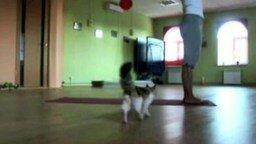 Смотреть Кошкина йога