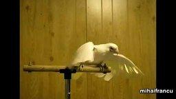 Танцующие попугаи смотреть видео прикол - 2:19