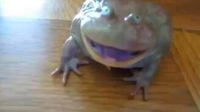 Смотреть Странный возглас лягушки