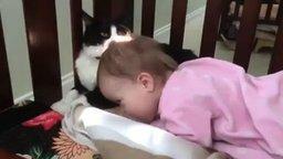 Смотреть Кошка начищает малышку