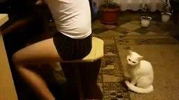 Смотреть Кот издевается над мальчишкой