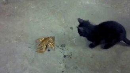 Смотреть Котёнок против раков