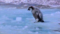 Смотреть Лучшие пингвиньи курьёзы