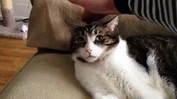 Смотреть Кот в недоумении