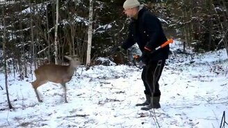 Смотреть Смелый оленёнок против охотника