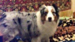 Смотреть Собака и сирена