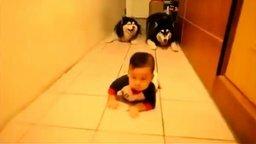 Хаски ползут за малышом смотреть видео прикол - 0:26