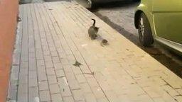 Бесстрашная и ловкая крыса против кошки смотреть видео прикол - 1:41