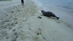 Смотреть Тюлень обокрал рыбака