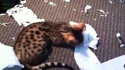 Смотреть Кошки против туалетной бумаги